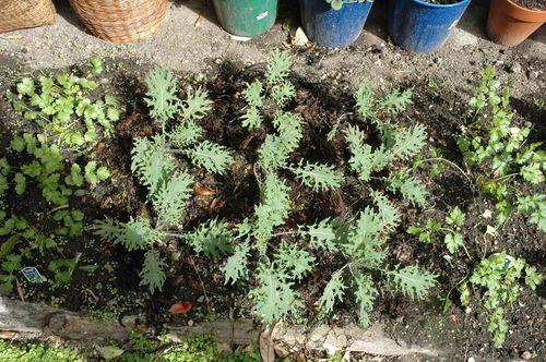 Kale & Herbs